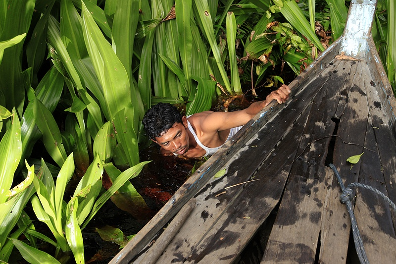 Nasir Jambang pulls his 'pompong´ boat out from being stuck in a reed bank. The water ways become narrow and difficult to navigate further into the forest as the vegetation becomes so dense.