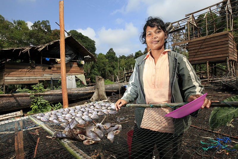 A woman lays out her fish catch from the Serkap river in front of her home. People in Teluk Meranti make their living mainly from fishing and farming. Some also live by selling different roots and vegetation from the rainforest now under threat from logging companies.