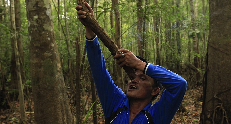 Mohammed Yusuf drinks fresh water from a tree creeper on a tour of the Karupatan nature resevre near his village Teluk Meranti.