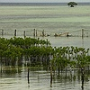 Mangrove protection