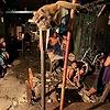 Performance monkey