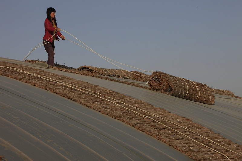 Miss Cai rolls down straw mats over her greenhouse prior to sunset, helping to trap heat and retain as much moisture as possible. Local farmers such as Miss Cai continue to farm frugally with limited water resources in low greenhouses with the help of government grants. For each greenhouse built in Minqin the farmers receive grants approaching half the cost warranted by the amount of water saved.