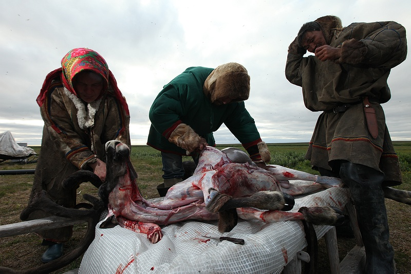 Kirill and some tribe members careful skin and carve up a freshly killed deer. All parts of the body will be used and the deer will provide instant nourishment. Thread, skin and dried meat will sustain, clothe and house the tribe for months to come.