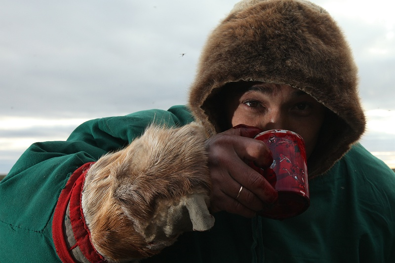 The Nenets drink the warm reindeer blood just after the slaughter.