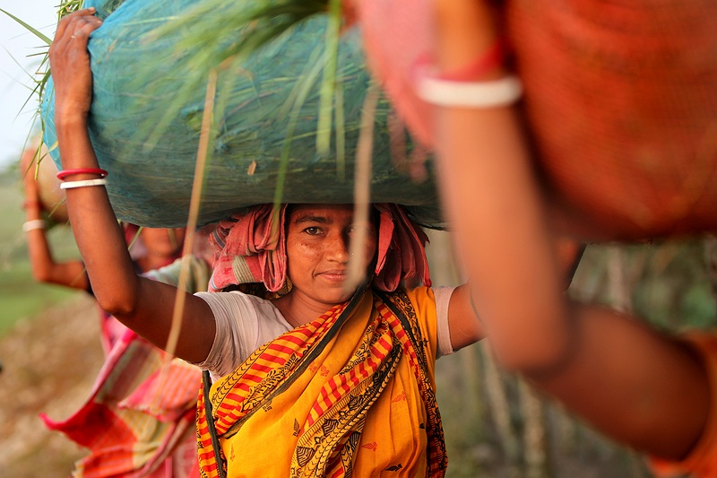 Women carry grass from the river shore for their cattle. Many animals are starving, withered and thin before the monsoon since there is insufficient food because of the drought. Changes in weather patterns and the increasingly unpredictable monsoon season is affecting people right across India dependent on agriculture. India will struggle to cope with a +2°C rise in temperature.