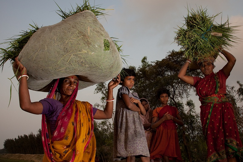 In fields by the sea front women collect the last hay and grass to feed their cattle. Families struggle to feed livestock after the long drought.