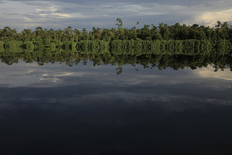 Intact peatland rainforest reflected in 'Lake Besar', during a journey through some of Riau's most beautiful forests. This area is currently under threat by logging companies wishing to obtain to permits to clear and drain the land to make way for palm oil and acacia plantations. These peat soil rainforests are one of the most important carbon sinks in the world and play a vital role in regulating the global climate.